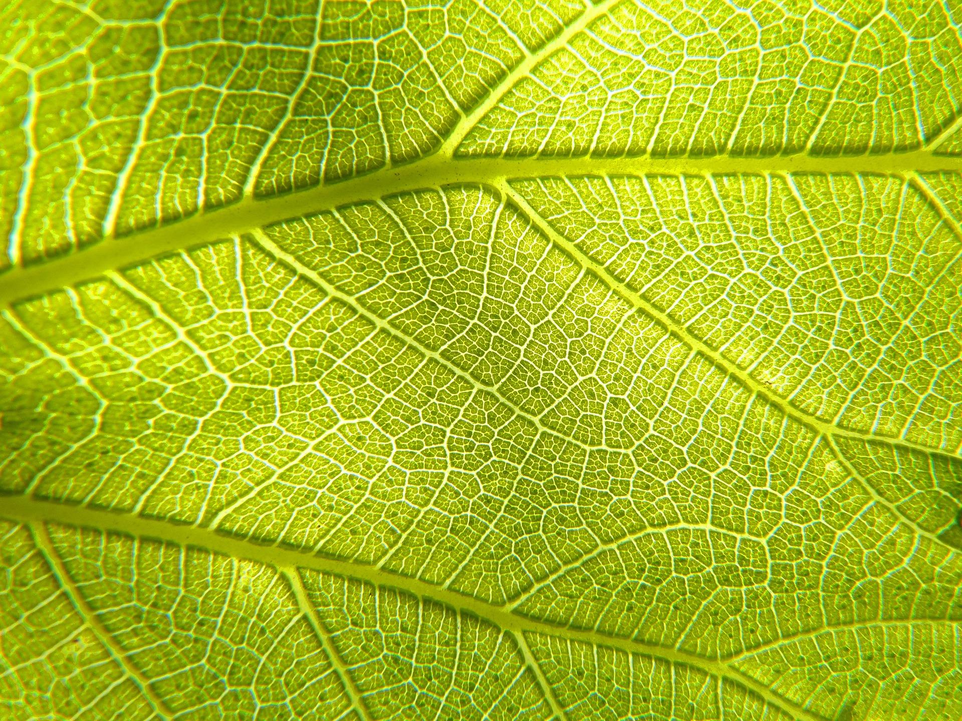 leaf 3333950 1920